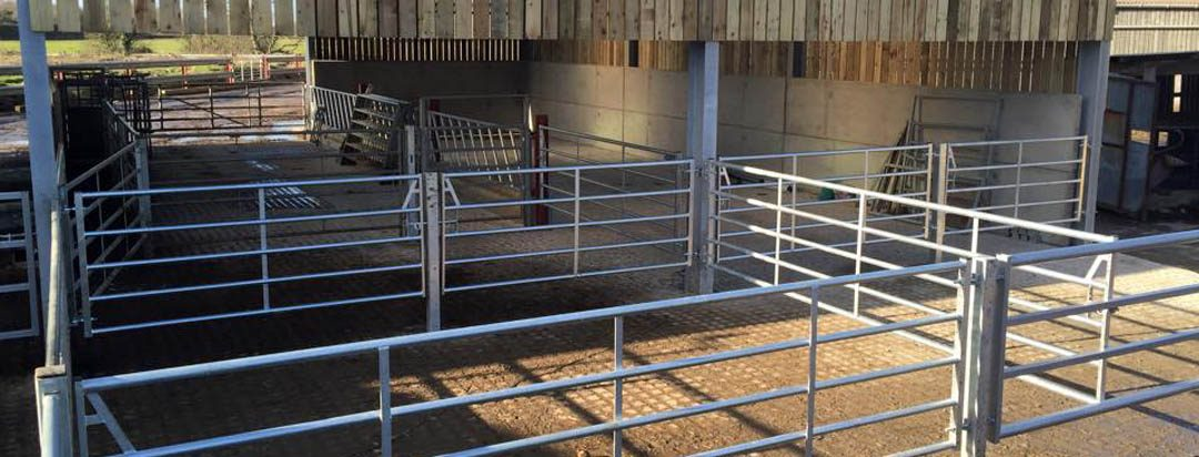 How to Create an Effective Livestock Handling System